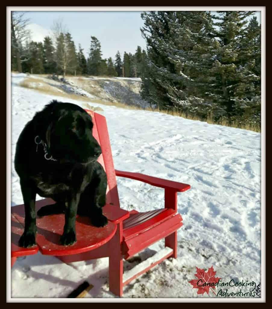 canadian dog