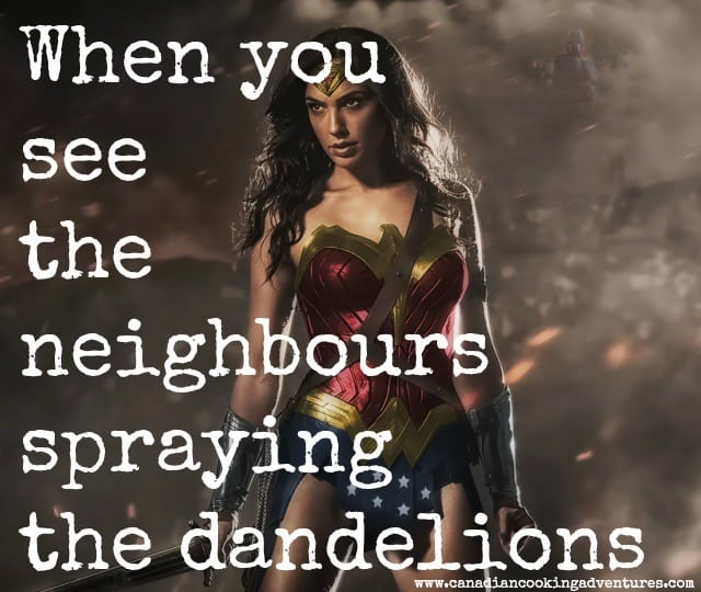 when you see the neighbours spraying the dandelions #quote #dandelions #bee #bees #honey #pecticides